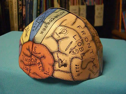 Make 3D Brain Model http://www.ellenjmchenry.com/homeschool-freedownloads/lifesciences-games/brainhemishpere.php