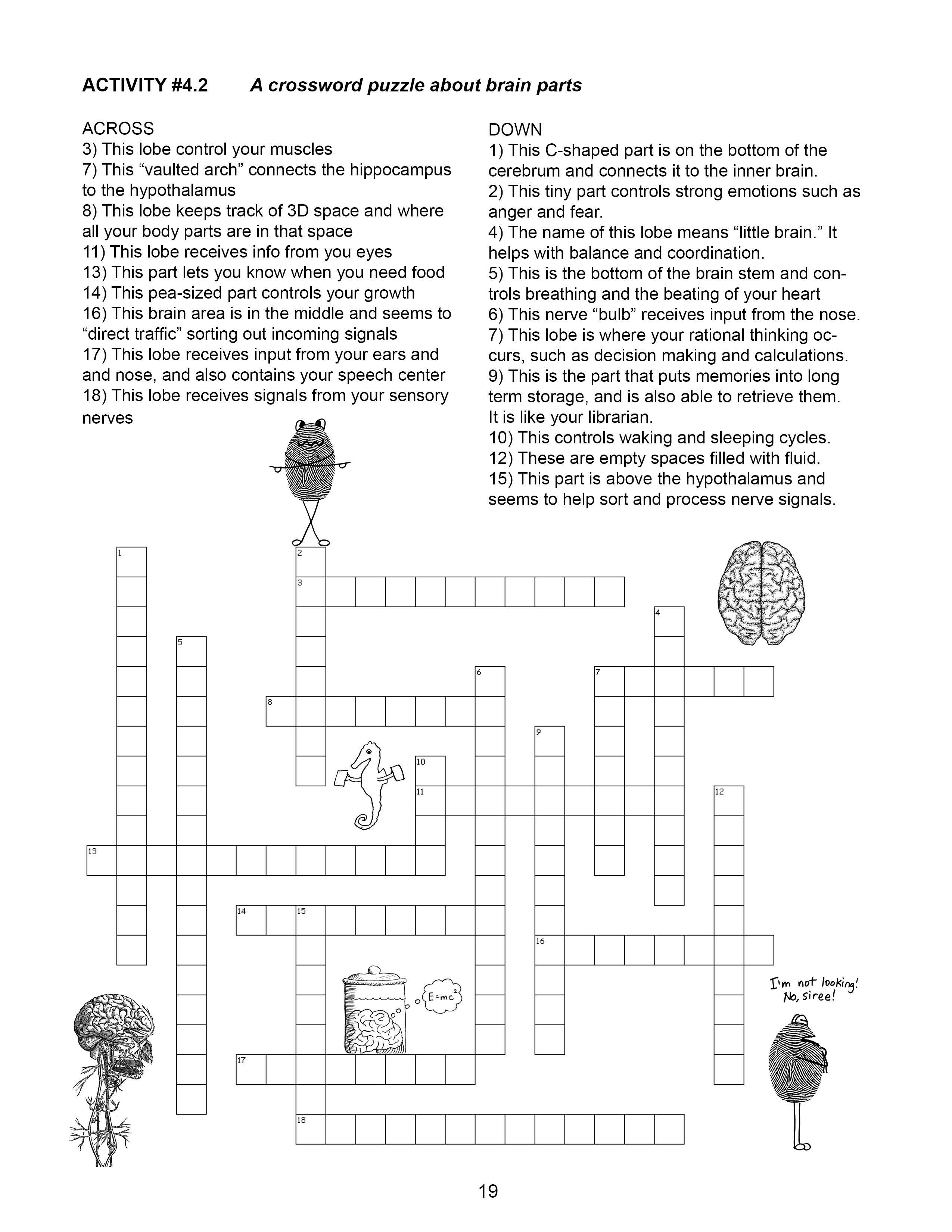 Braincurriculum page19 crossword puzzle 42 ccuart Image collections
